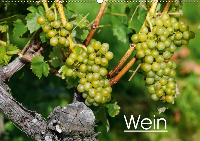 Wein (Wandkalender 2017 DIN A2 quer) - Coverbild
