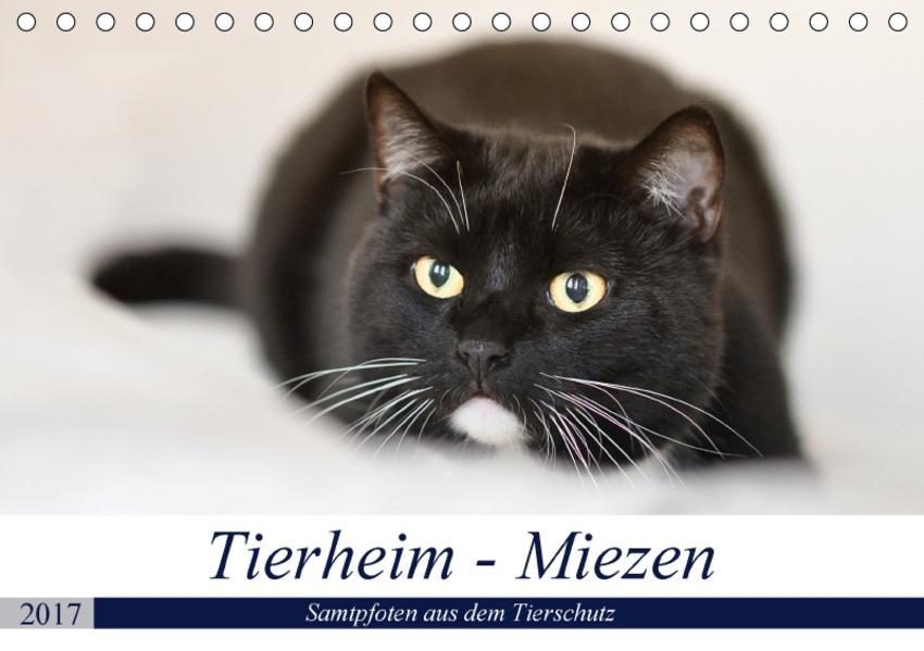 Tierheim-Miezen (Tischkalender 2017 DIN A5 quer) - Coverbild