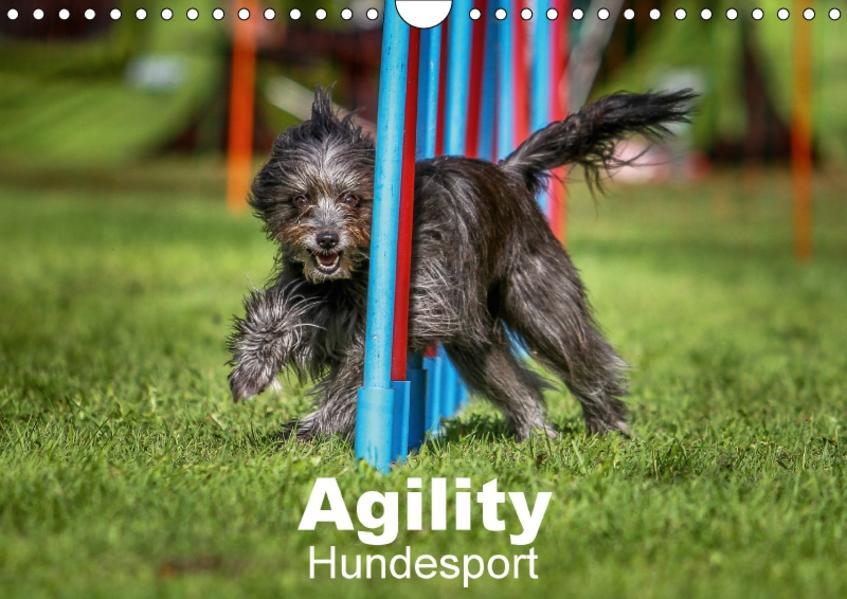 Agility Hundesport (Wandkalender 2017 DIN A4 quer) - Coverbild