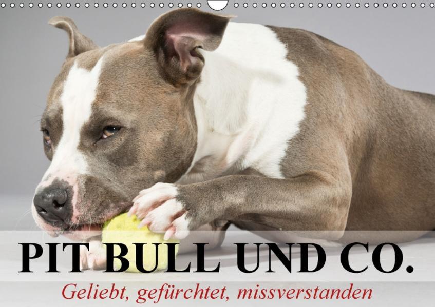 Pit Bull und Co. - Geliebt, gefürchtet, missverstanden (Wandkalender 2017 DIN A3 quer) - Coverbild