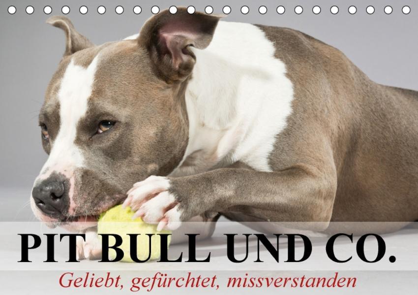 Pit Bull und Co. - Geliebt, gefürchtet, missverstanden (Tischkalender 2017 DIN A5 quer) - Coverbild