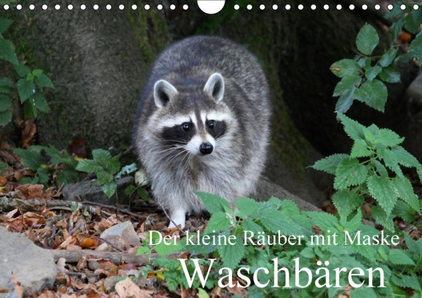 Der kleine Räuber mit Maske - Waschbären (Wandkalender 2017 DIN A4 quer) - Coverbild