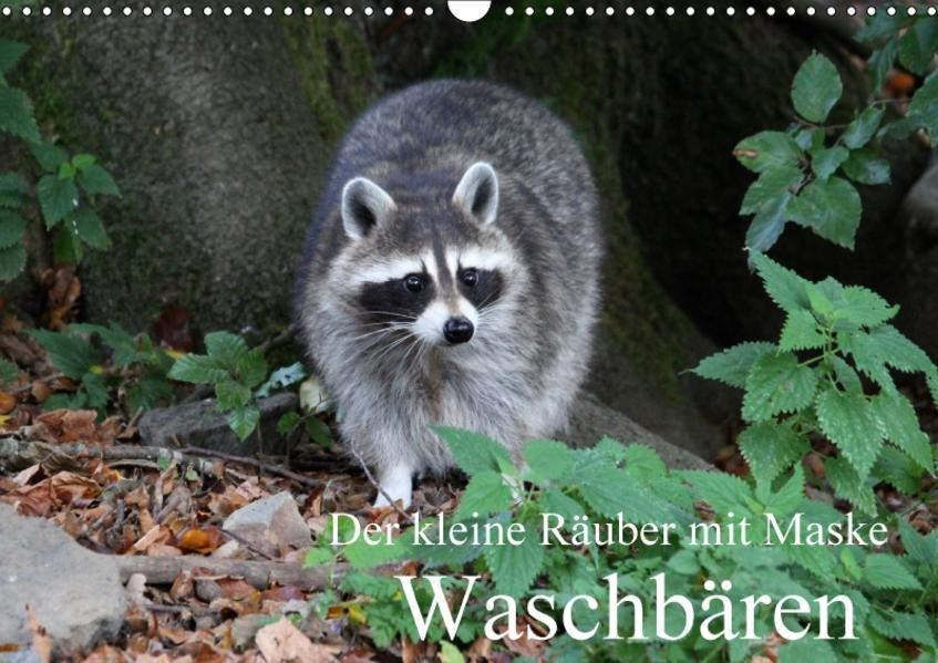 Der kleine Räuber mit Maske - Waschbären (Wandkalender 2017 DIN A3 quer) - Coverbild