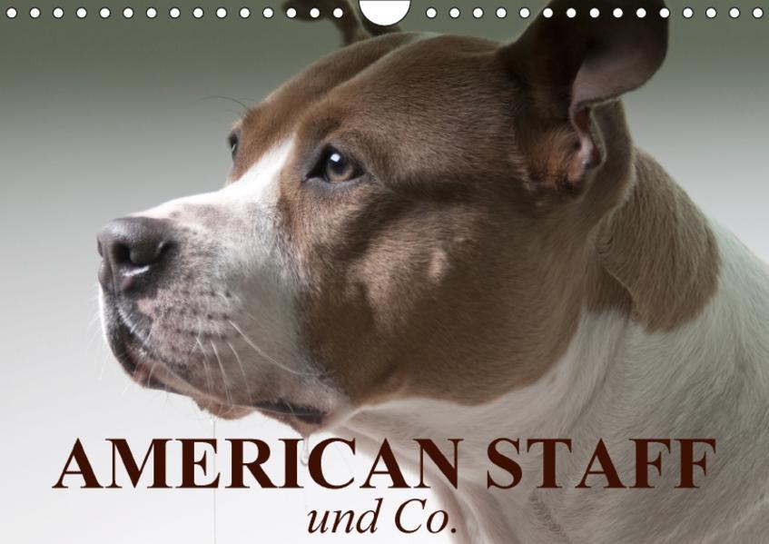 American Staff und Co. (Wandkalender 2017 DIN A4 quer) - Coverbild