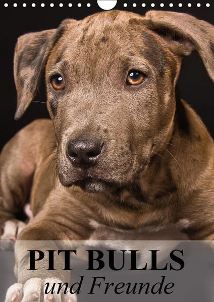 Pit Bulls und Freunde (Wandkalender 2017 DIN A4 hoch) - Coverbild