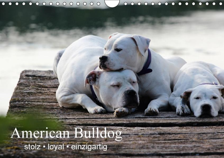 American Bulldog - stolz, loyal, einzigartig (Wandkalender 2017 DIN A4 quer) - Coverbild