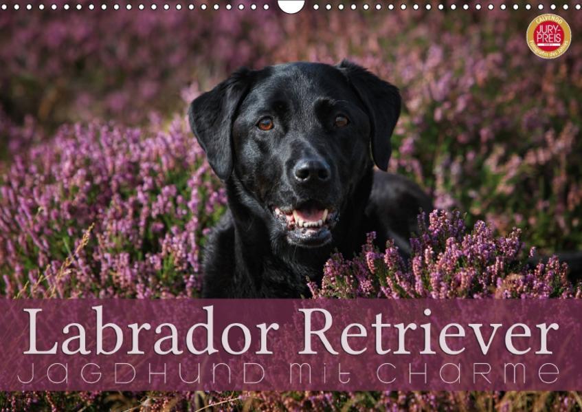 Labrador Retriever - Jagdhund mit Charme (Wandkalender 2017 DIN A3 quer) - Coverbild