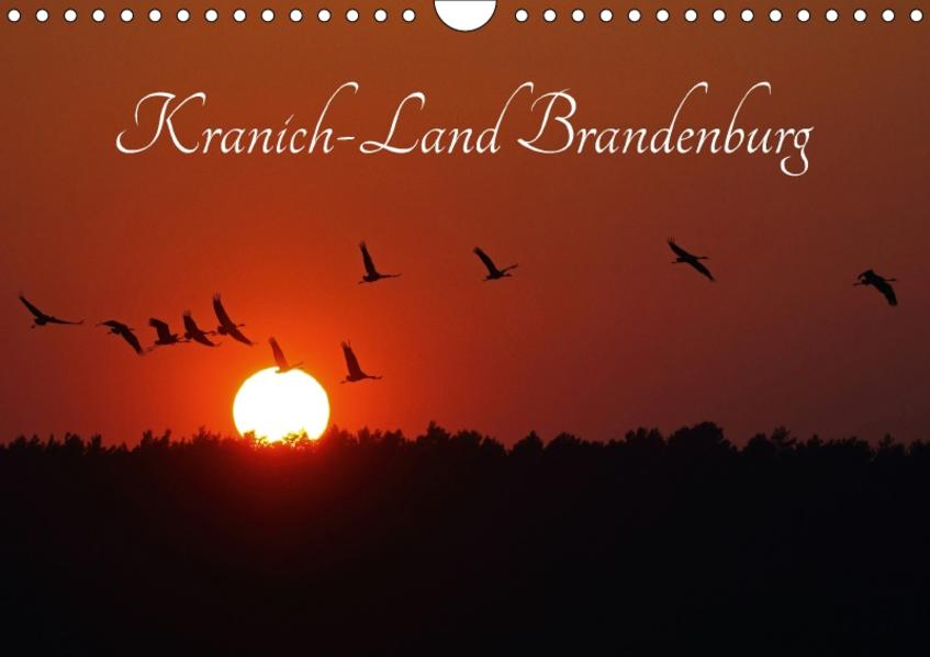 Kranich-Land Brandenburg (Wandkalender 2017 DIN A4 quer) - Coverbild