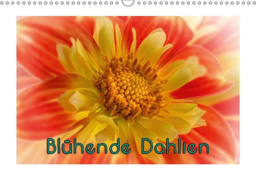 Blühende Dahlien (Wandkalender 2017 DIN A3 quer) - Coverbild