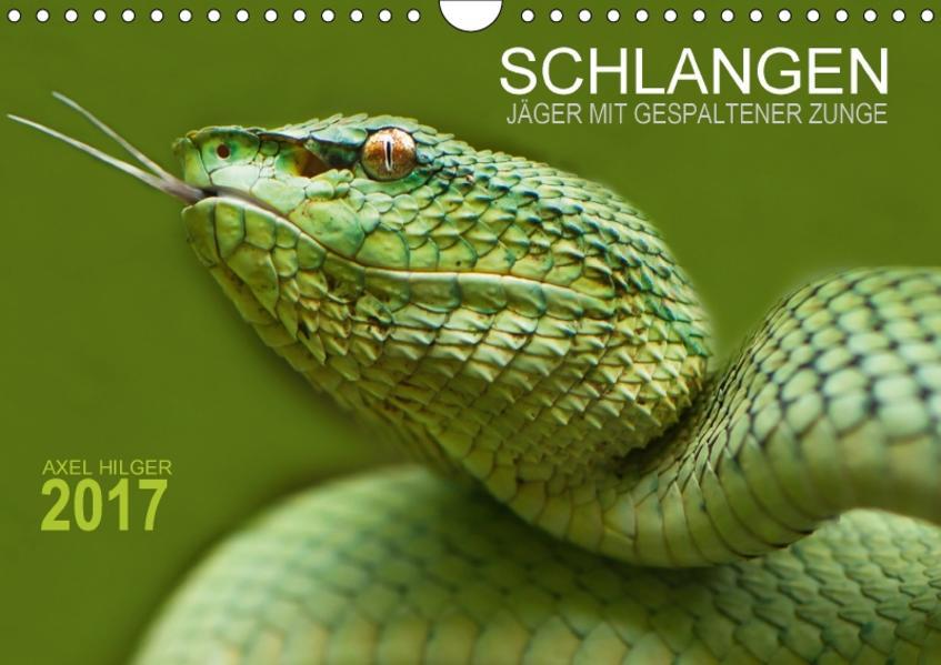 SCHLANGEN. JÄGER MIT GESPALTENER ZUNGE (Wandkalender 2017 DIN A4 quer) - Coverbild