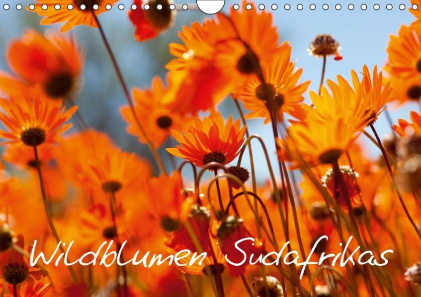 Wildblumen Südafrikas (Wandkalender 2017 DIN A4 quer) - Coverbild
