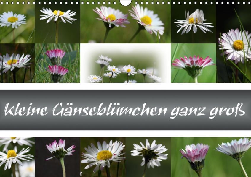 kleine Gänseblümchen ganz groß (Wandkalender 2017 DIN A3 quer) - Coverbild