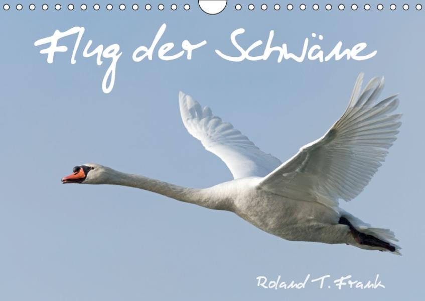 Flug der SchwäneAT-Version  (Wandkalender 2017 DIN A4 quer) - Coverbild