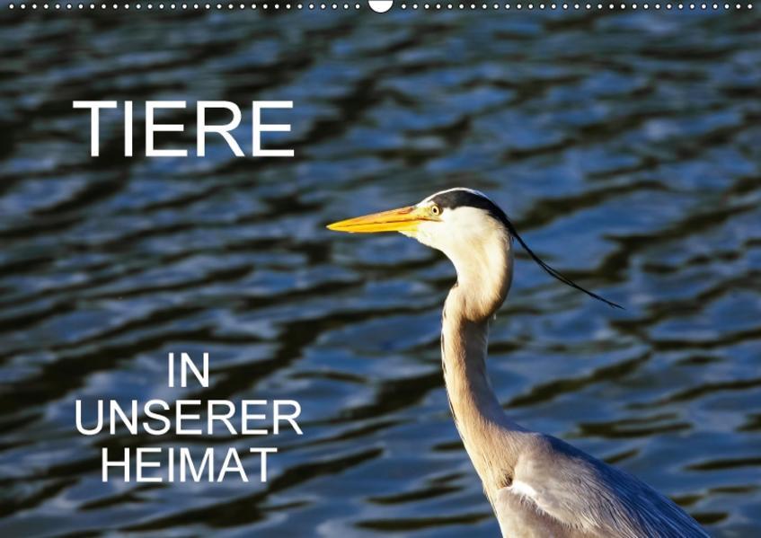 Tiere in unserer Heimat (Wandkalender 2017 DIN A2 quer) - Coverbild