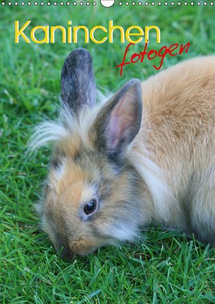 Kaninchen fotogen (Wandkalender 2017 DIN A3 hoch) - Coverbild