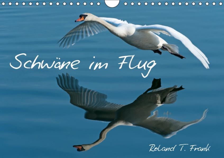 Schwäne im FlugCH-Version  (Wandkalender 2017 DIN A4 quer) - Coverbild