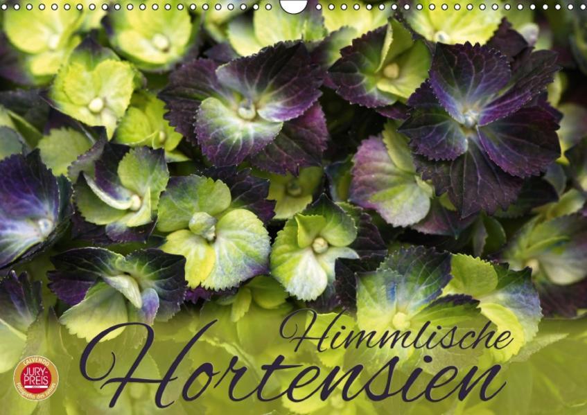 Himmlische Hortensien (Wandkalender 2017 DIN A3 quer) - Coverbild
