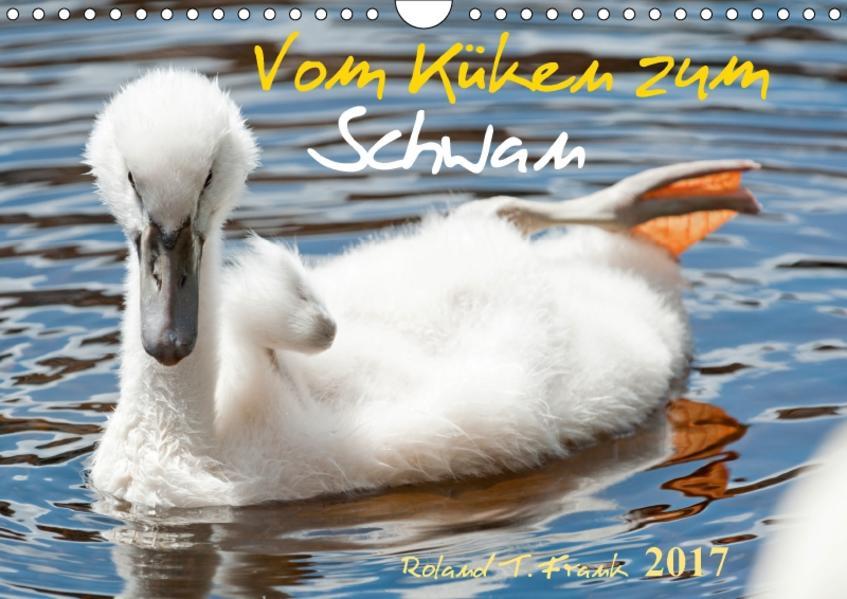 Vom Küken zum SchwanAT-Version  (Wandkalender 2017 DIN A4 quer) - Coverbild