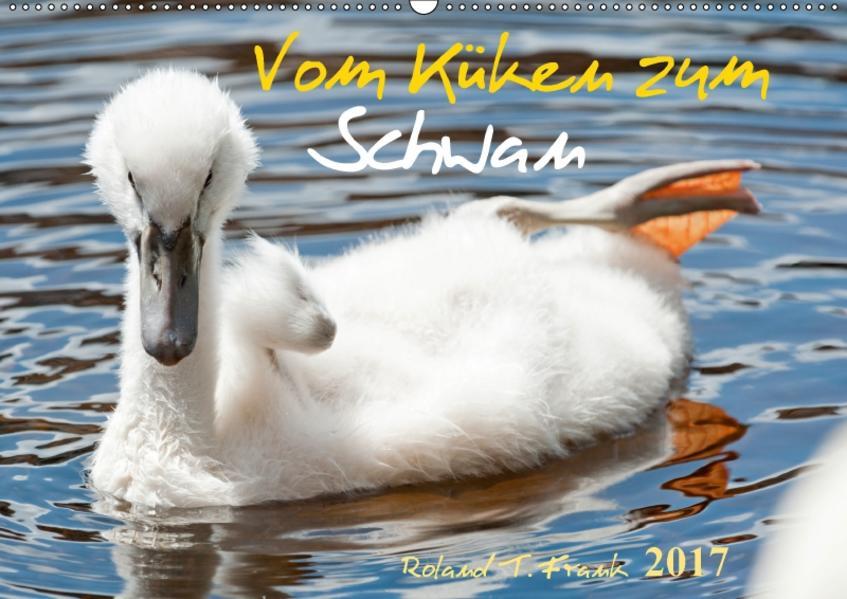 Vom Küken zum SchwanAT-Version  (Wandkalender 2017 DIN A2 quer) - Coverbild