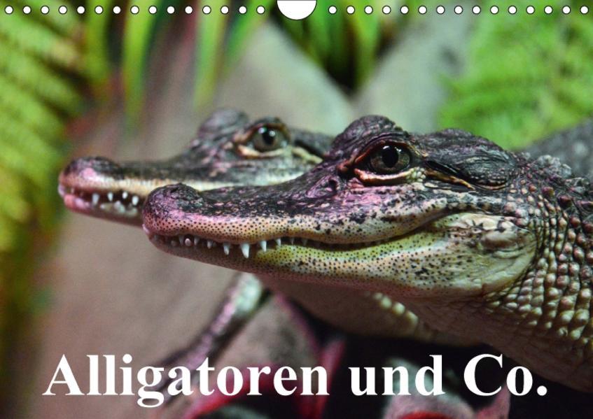 Alligatoren und Co. (Wandkalender 2017 DIN A4 quer) - Coverbild