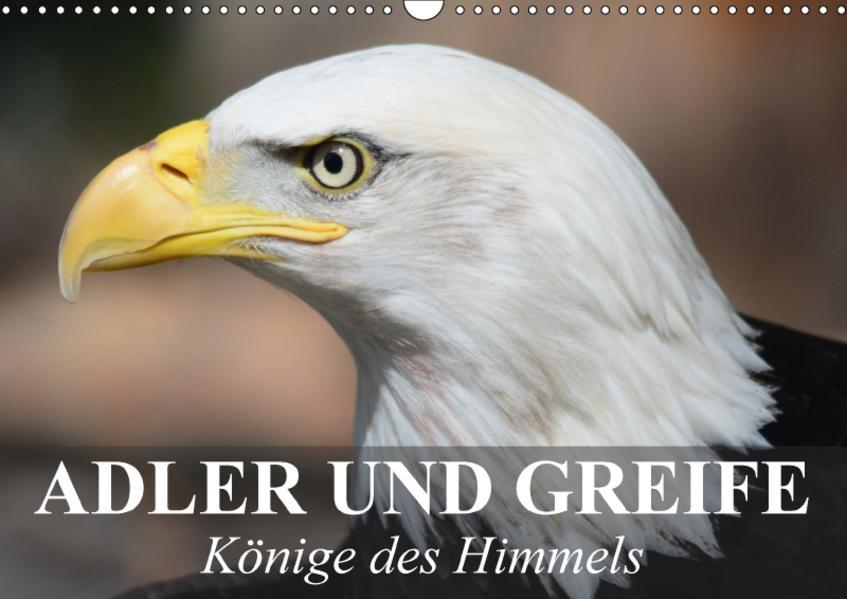 Adler und Greife - Könige des Himmels (Wandkalender 2017 DIN A3 quer) - Coverbild