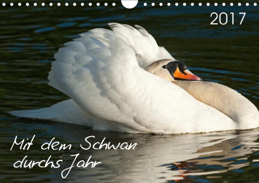 Mit dem Schwan durchs JahrAT-Version  (Wandkalender 2017 DIN A4 quer) - Coverbild