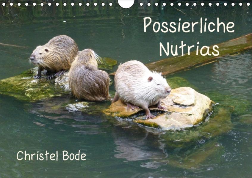 Possierliche Nutrias (Wandkalender 2017 DIN A4 quer) - Coverbild