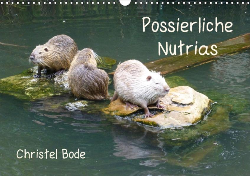 Possierliche Nutrias (Wandkalender 2017 DIN A3 quer) - Coverbild