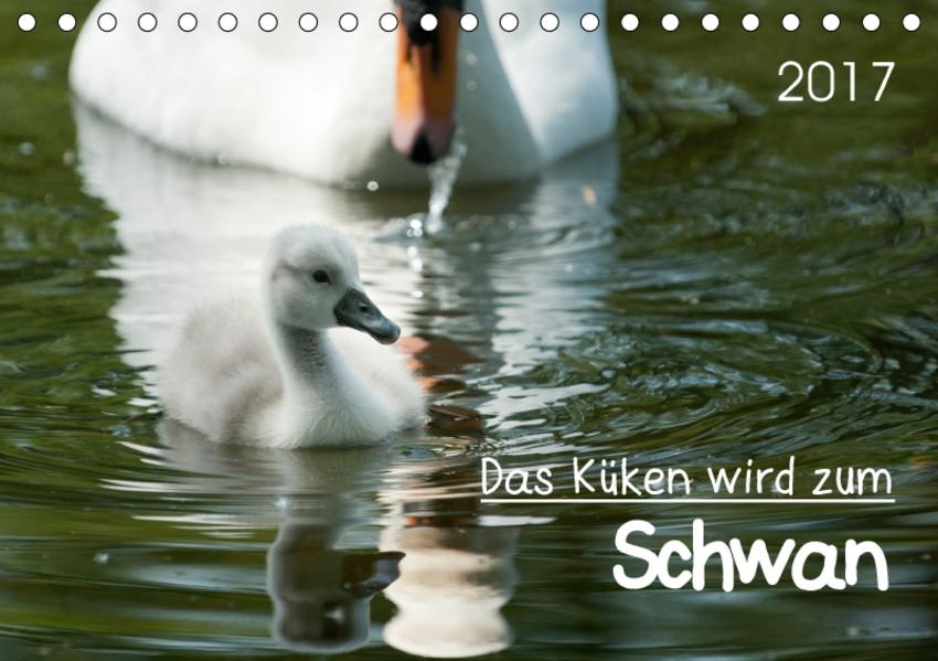Das Küken wird zum SchwanCH-Version  (Tischkalender 2017 DIN A5 quer) - Coverbild