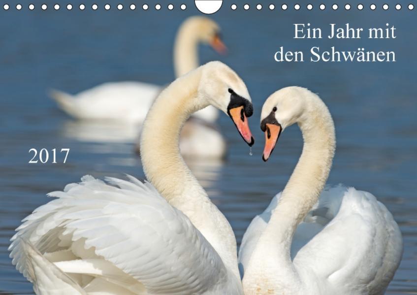 Ein Jahr mit den SchwänenCH-Version  (Wandkalender 2017 DIN A4 quer) - Coverbild