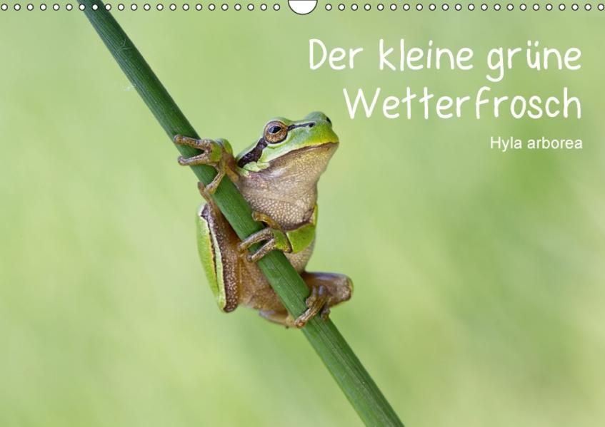 Der kleine grüne Wetterfrosch (Wandkalender 2017 DIN A3 quer) - Coverbild