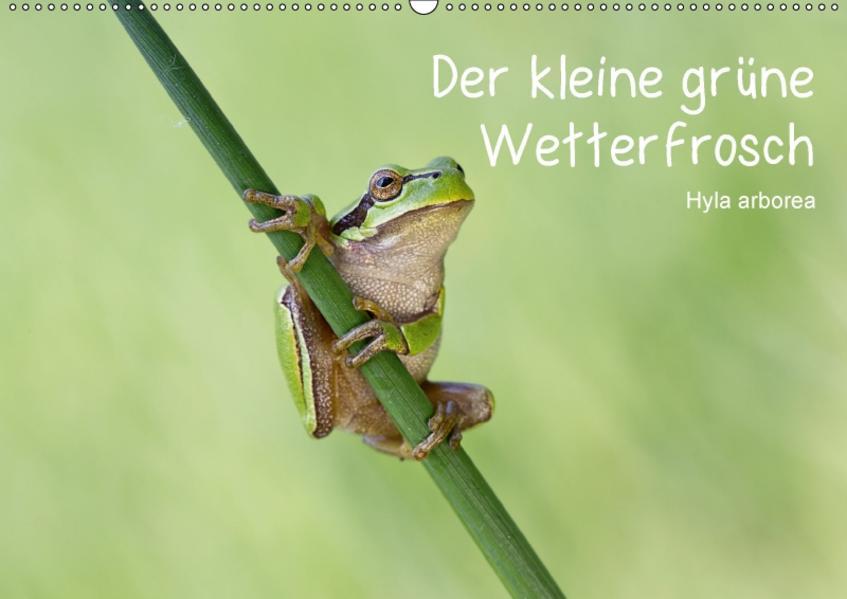 Der kleine grüne Wetterfrosch (Wandkalender 2017 DIN A2 quer) - Coverbild