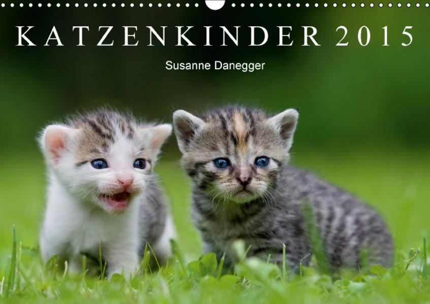 Katzenkinder 2017 (Wandkalender 2017 DIN A3 quer) - Coverbild