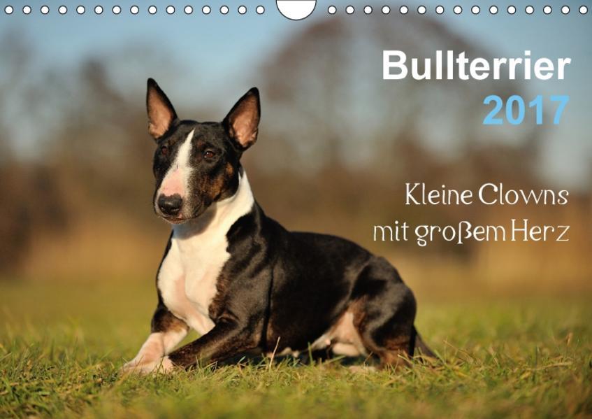 Bullterrier 2017 - Kleine Clowns mit großem Herz (Wandkalender 2017 DIN A4 quer) - Coverbild