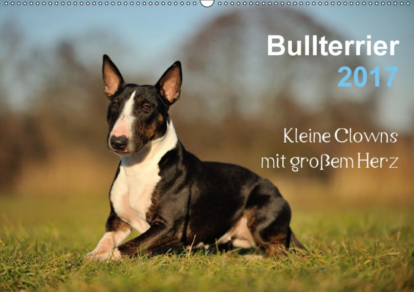 Bullterrier 2017 - Kleine Clowns mit großem Herz (Wandkalender 2017 DIN A2 quer) - Coverbild