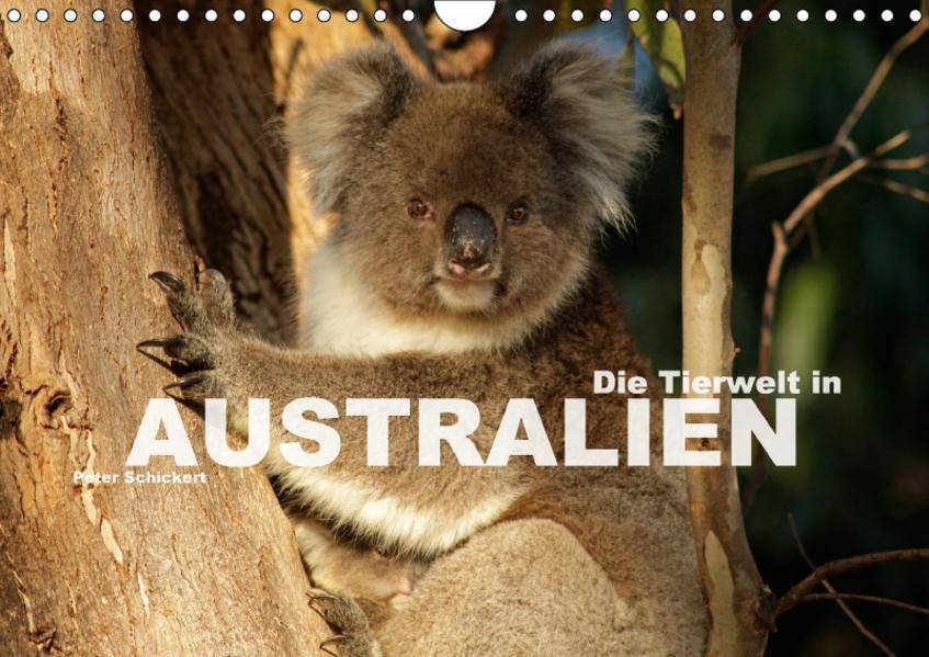 Die Tierwelt in Australien (Wandkalender 2017 DIN A4 quer) - Coverbild