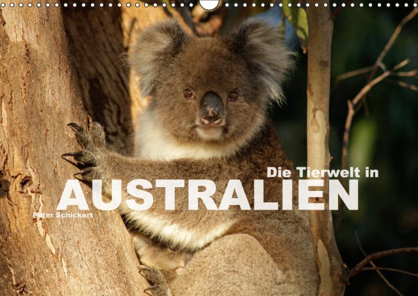 Die Tierwelt in Australien (Wandkalender 2017 DIN A3 quer) - Coverbild