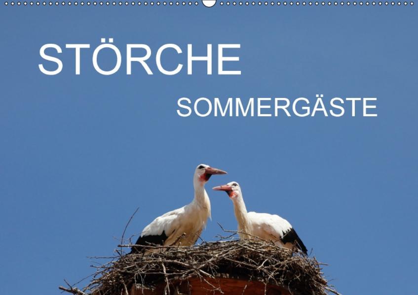 Störche - SommergästeAT-Version  (Wandkalender 2017 DIN A2 quer) - Coverbild