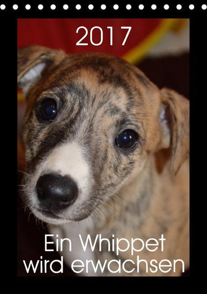 Ein Whippet wird erwachsen (Tischkalender 2017 DIN A5 hoch) - Coverbild