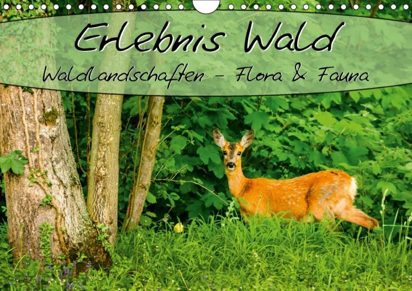Erlebnis Wald (Wandkalender 2017 DIN A4 quer) - Coverbild