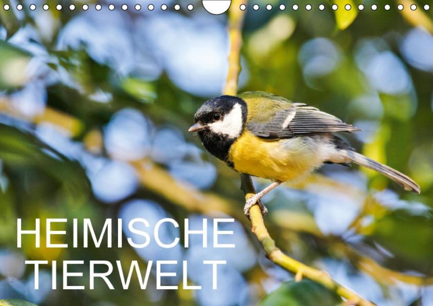 Heimische TierweltCH-Version  (Wandkalender 2017 DIN A4 quer) - Coverbild