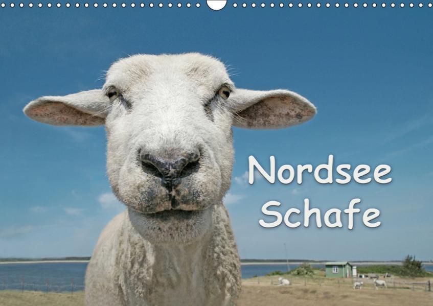 Nordsee Schafe (Wandkalender 2017 DIN A3 quer) - Coverbild