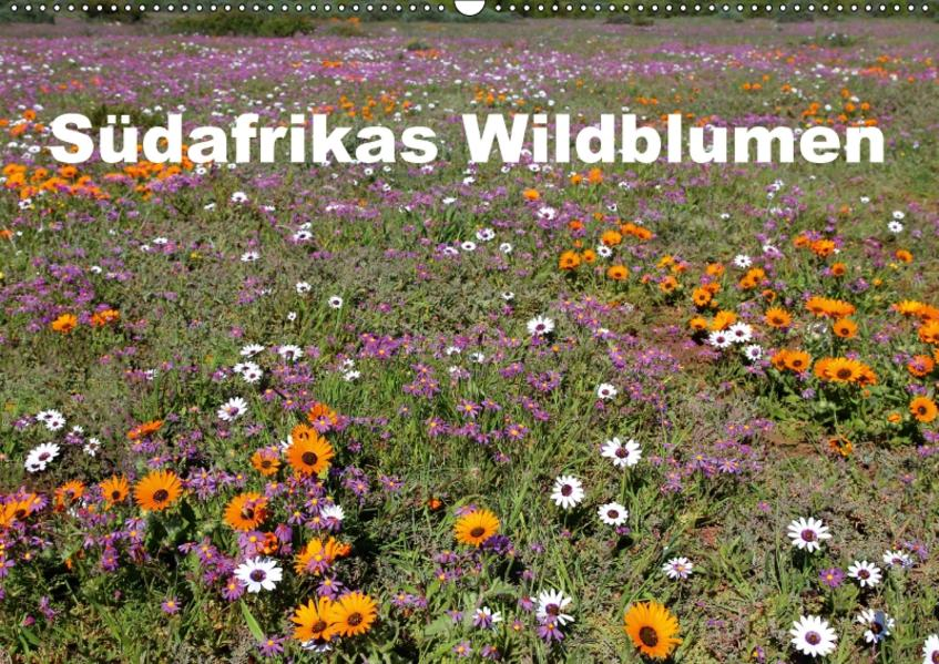 Südafrikas Wildblumen (Wandkalender 2017 DIN A2 quer) - Coverbild