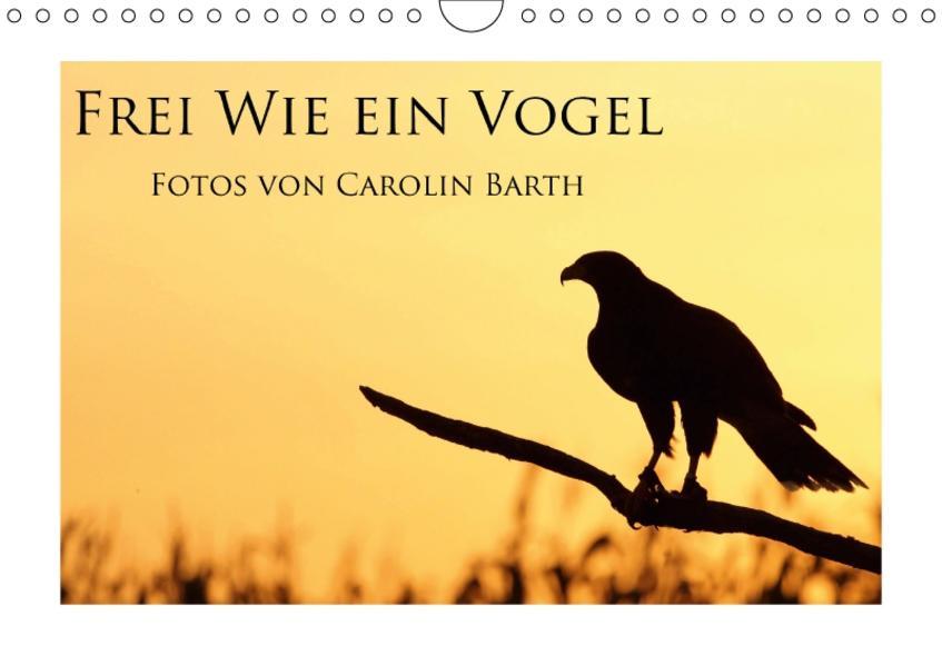 Frei wie ein Vogel (Wandkalender 2017 DIN A4 quer) - Coverbild