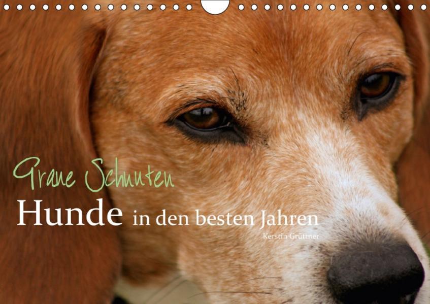Graue Schnuten - Hunde in den besten Jahren (Wandkalender 2017 DIN A4 quer) - Coverbild
