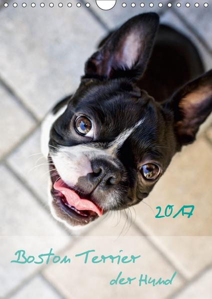 Boston Terrier der Hund 2017 (Wandkalender 2017 DIN A4 hoch) - Coverbild