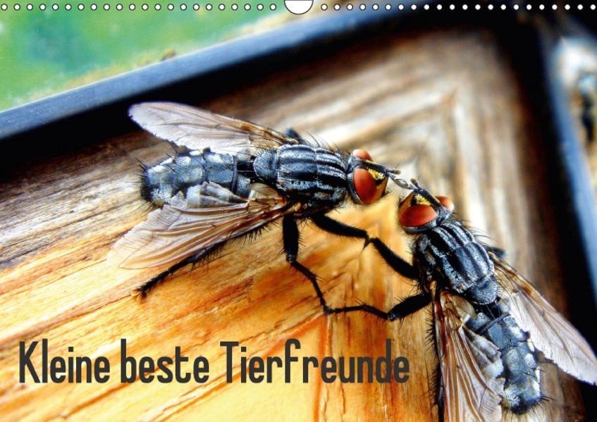 Kleine beste Tierfreunde (Wandkalender 2017 DIN A3 quer) - Coverbild