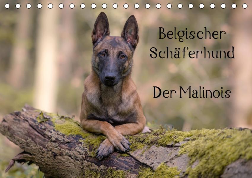 Belgischer Schäferhund - Der Malinois (Tischkalender 2017 DIN A5 quer) - Coverbild