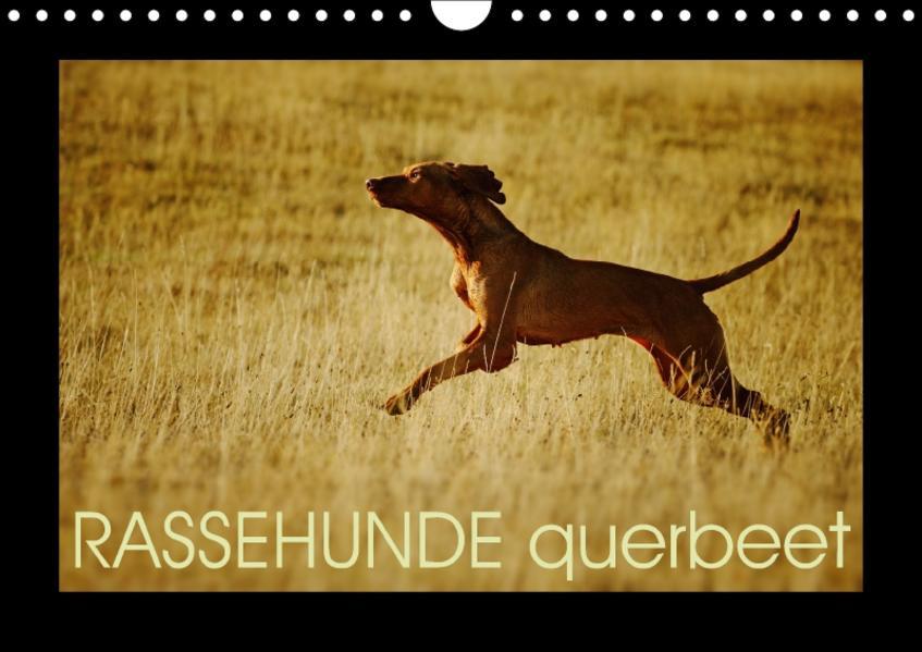 RASSEHUNDE querbeet (Wandkalender 2017 DIN A4 quer) - Coverbild