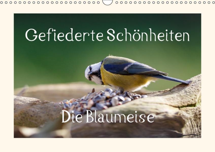 Gefiederte Schönheiten - Die Blaumeise (Wandkalender 2017 DIN A3 quer) - Coverbild